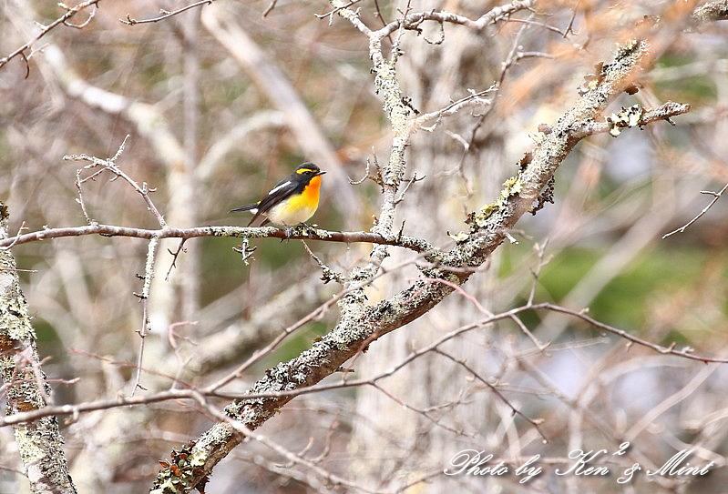 高原で会えた鳥達^^ 一挙公開 (*^^*)♪ 世界遺産も♪_e0218518_19490556.jpg