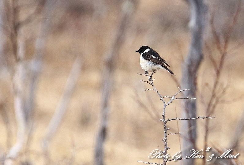 高原で会えた鳥達^^ 一挙公開 (*^^*)♪ 世界遺産も♪_e0218518_19495678.jpg