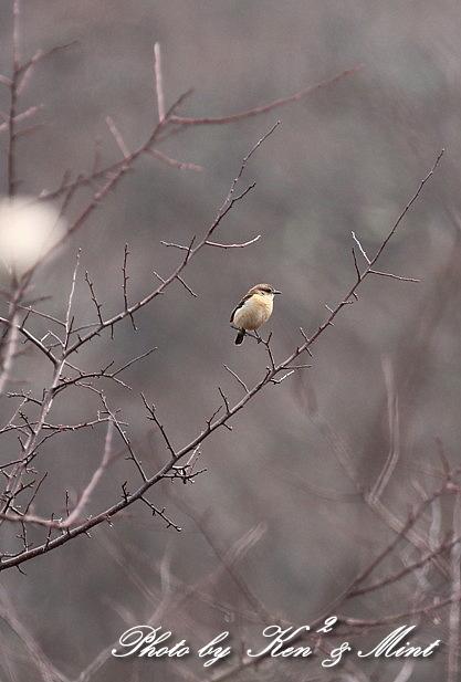 高原で会えた鳥達^^ 一挙公開 (*^^*)♪ 世界遺産も♪_e0218518_19502860.jpg