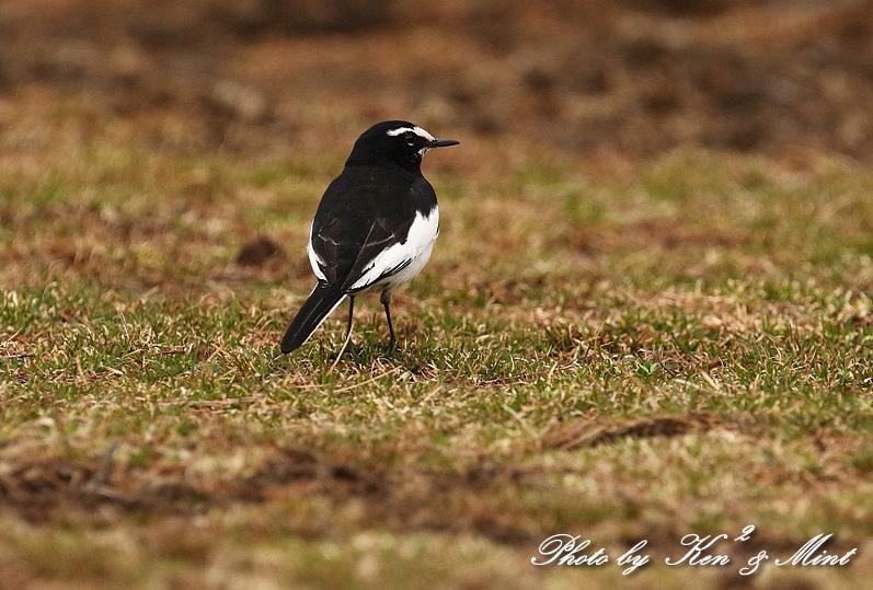 高原で会えた鳥達^^ 一挙公開 (*^^*)♪ 世界遺産も♪_e0218518_19511340.jpg