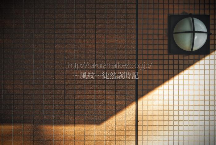6月の斜陽。_f0235723_2036010.jpg