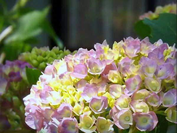 6月の紫陽花工房_c0141013_23141943.jpg