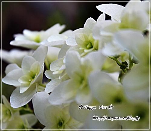 f0348032_18180699.jpg