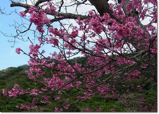 沖縄1日目_b0025947_14494680.jpg