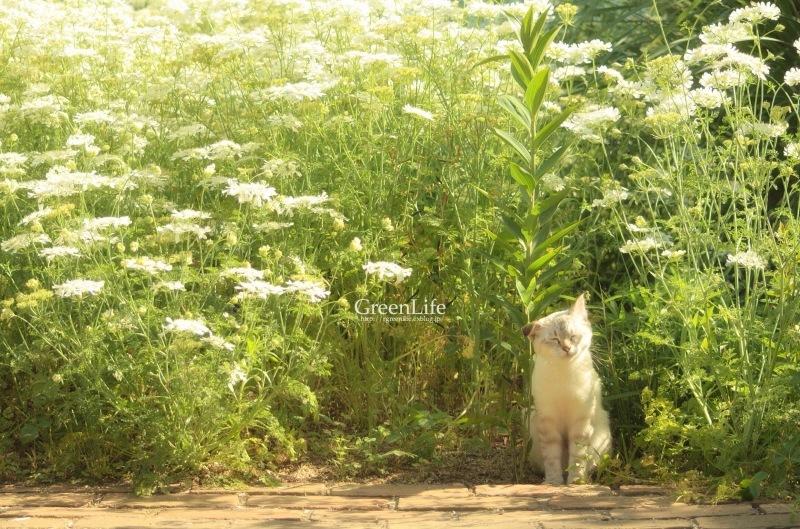 The Secret Garden   #4_f0321522_15263007.jpg