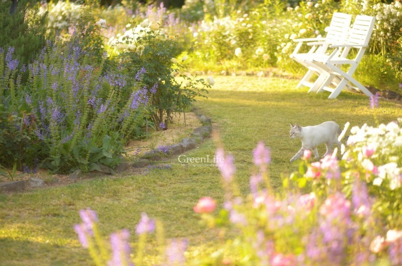 The Secret Garden   #4_f0321522_15301377.jpg