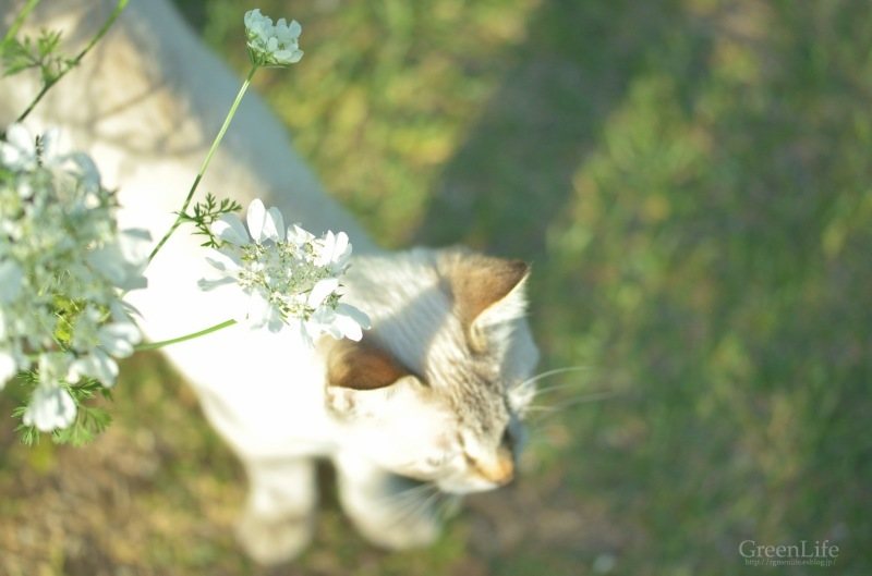 The Secret Garden   #4_f0321522_15363005.jpg