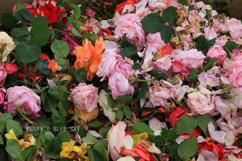 「バラ祭り」やってました♪_c0145250_09260648.jpg