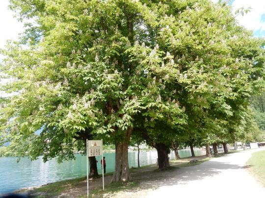'17,6,8(木)6.ブレッド湖とブレッド城の観光③!_f0060461_08121985.jpg