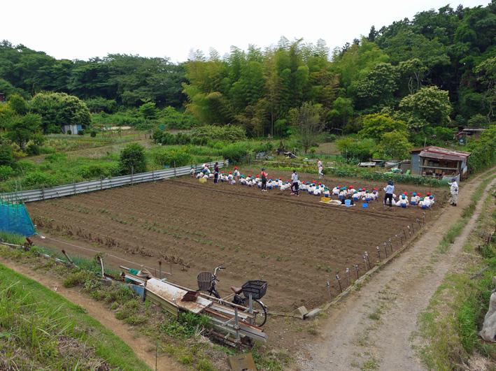 六国見山で幼稚園児が楽しそうにジャガイモ掘り(6・7)_c0014967_245279.jpg