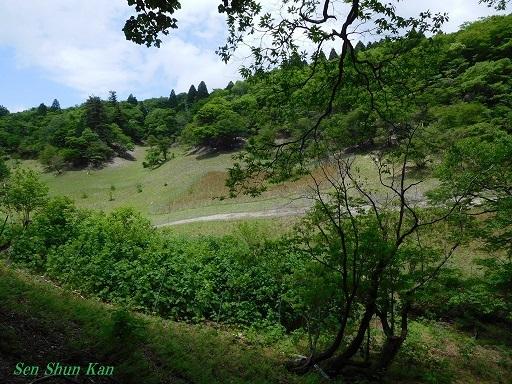 緑の八丁平  2017年6月3日_a0164068_16254746.jpg