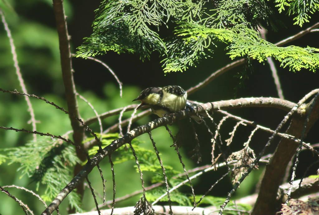 幼鳥の季節③_b0223198_19160561.jpg