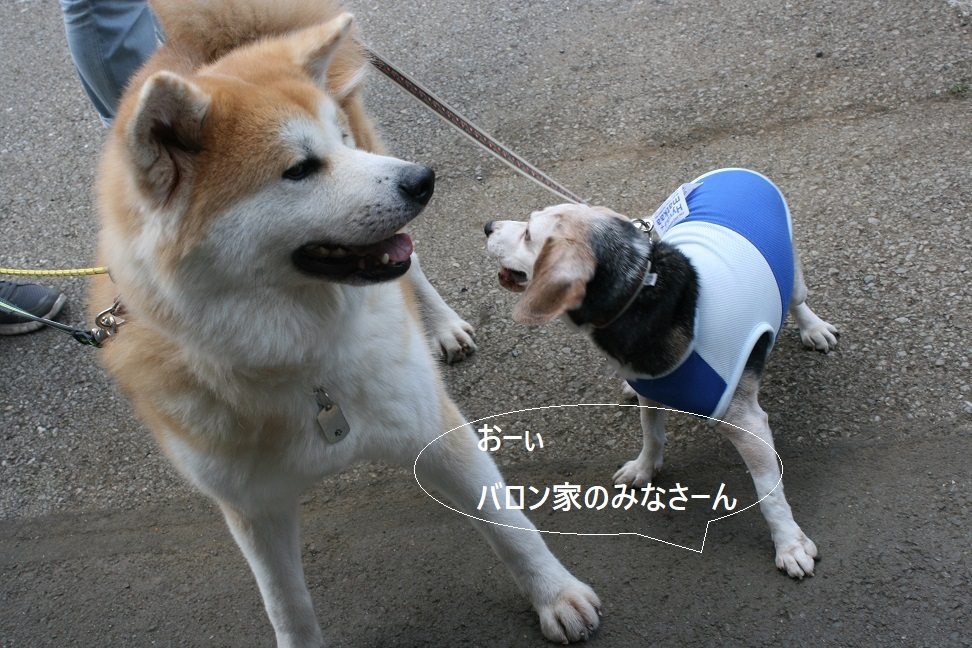 マーベラス譲渡会_f0242002_19412564.jpg