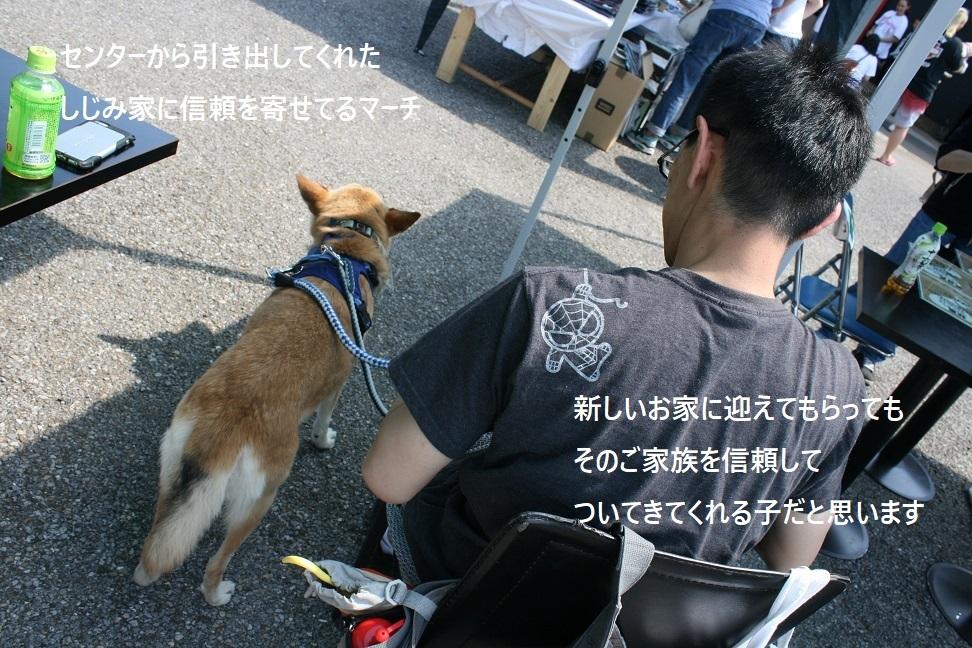 マーベラス譲渡会_f0242002_19460043.jpg