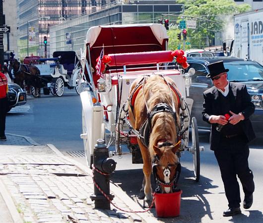 セントラルパーク前のフレンドリーな馬車のお馬さんたち_b0007805_8375423.jpg