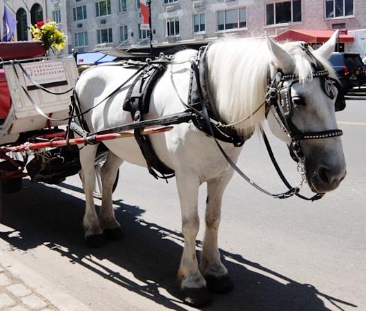 セントラルパーク前のフレンドリーな馬車のお馬さんたち_b0007805_8392668.jpg