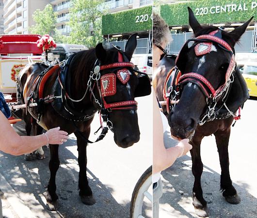 セントラルパーク前のフレンドリーな馬車のお馬さんたち_b0007805_840822.jpg