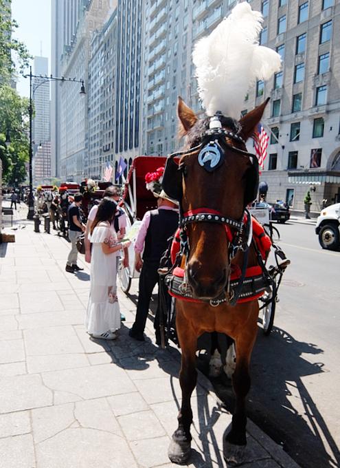 セントラルパーク前のフレンドリーな馬車のお馬さんたち_b0007805_8415121.jpg