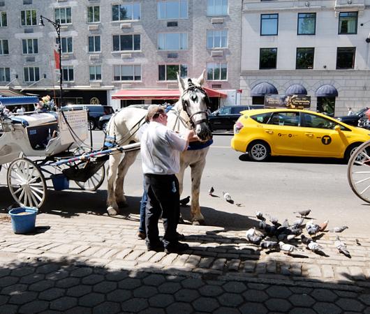 セントラルパーク前のフレンドリーな馬車のお馬さんたち_b0007805_841574.jpg