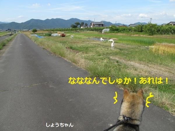 f0143123_14262359.jpg