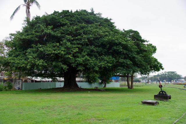 工場や鉄道施設のリノベーションを彩る木々の緑_d0362031_09135336.jpg