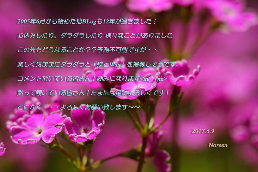 d0069235_06200681.jpg