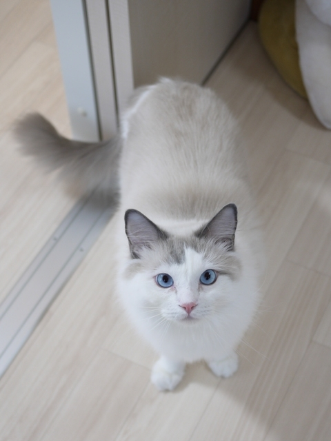 猫のお留守番 小石丸くん編。_a0143140_21152563.jpg