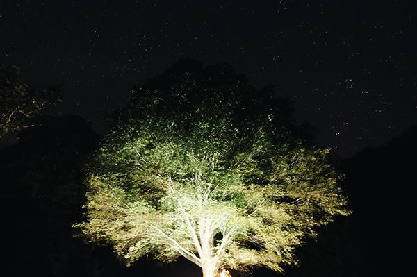 """""""或る森の食卓 vol.3""""_c0228742_23145935.jpg"""
