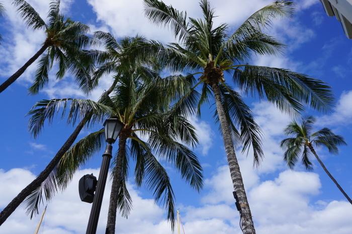 ハワイ旅行 6日目5月4日オアフ島最終日の朝 23_d0152261_12035645.jpg
