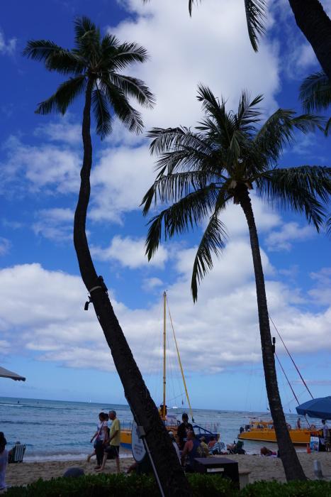 ハワイ旅行 6日目5月4日オアフ島最終日の朝 23_d0152261_12054703.jpg