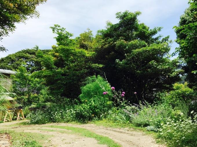 Kusaniwa  garden  0607_b0167282_17340568.jpg