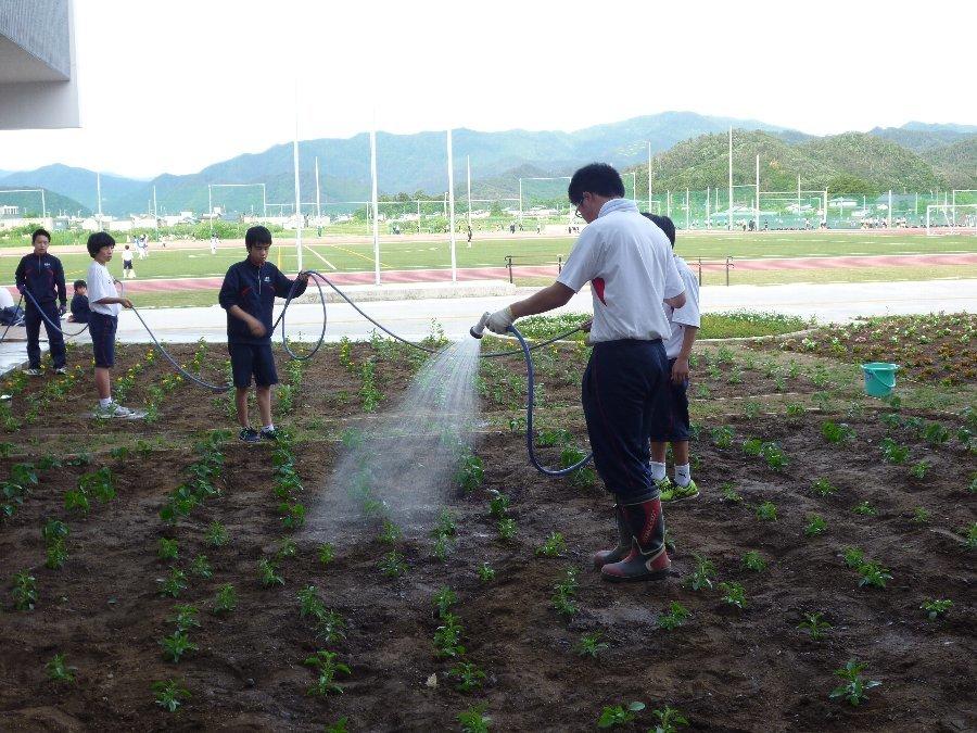 学校花壇、学校農園の植栽、そして、たぬきのちょうちん像いらっしゃい_e0359282_21114673.jpg