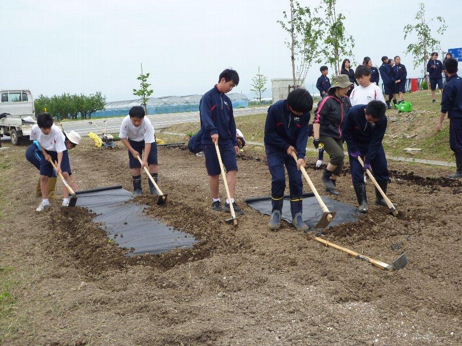 学校花壇、学校農園の植栽、そして、たぬきのちょうちん像いらっしゃい_e0359282_21115020.jpg