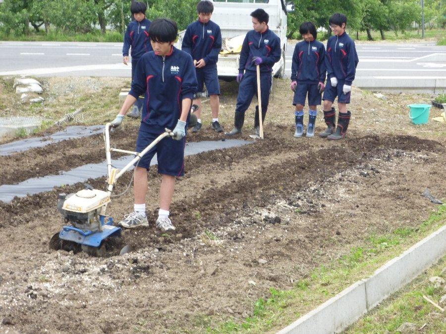 学校花壇、学校農園の植栽、そして、たぬきのちょうちん像いらっしゃい_e0359282_21115375.jpg