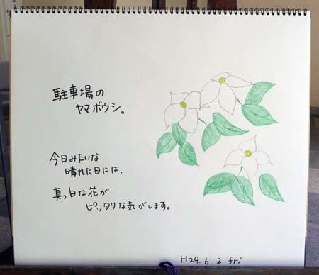 ヤマボウシ_b0364195_12502027.jpg