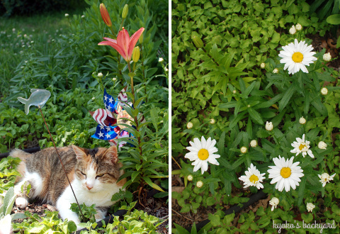 裏庭の花壇の様子(6月上旬)。マスタードシードの収穫。_b0253205_03391295.jpg
