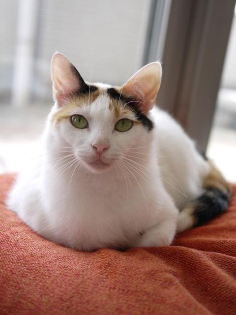 猫のお留守番 エンジェルちゃん編。_a0143140_19593826.jpg