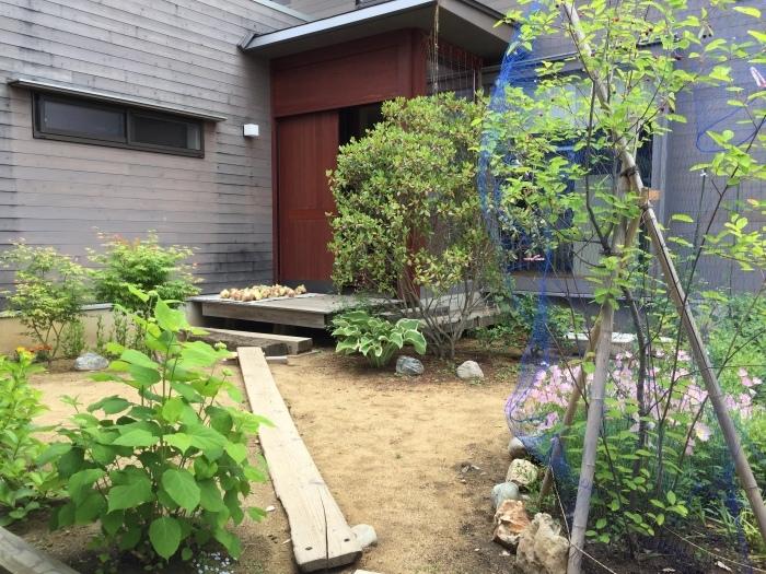 庭の植物_d0332870_14391168.jpg