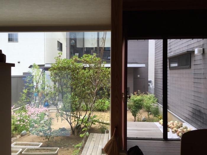 庭の植物_d0332870_14394975.jpg