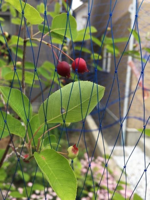 庭の植物_d0332870_14402673.jpg