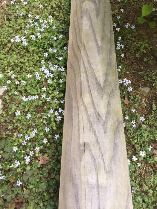 庭の植物_d0332870_14403370.jpg