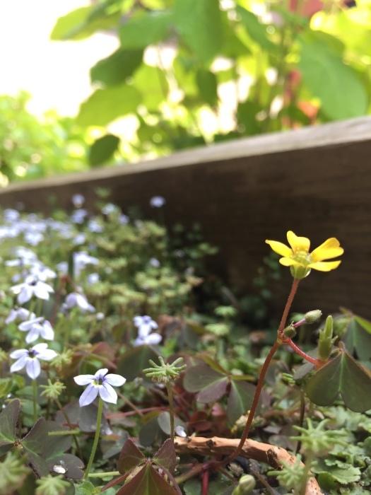 庭の植物_d0332870_14404875.jpg