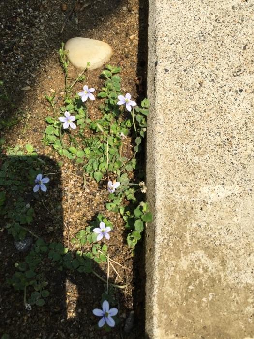 庭の植物_d0332870_14411629.jpg