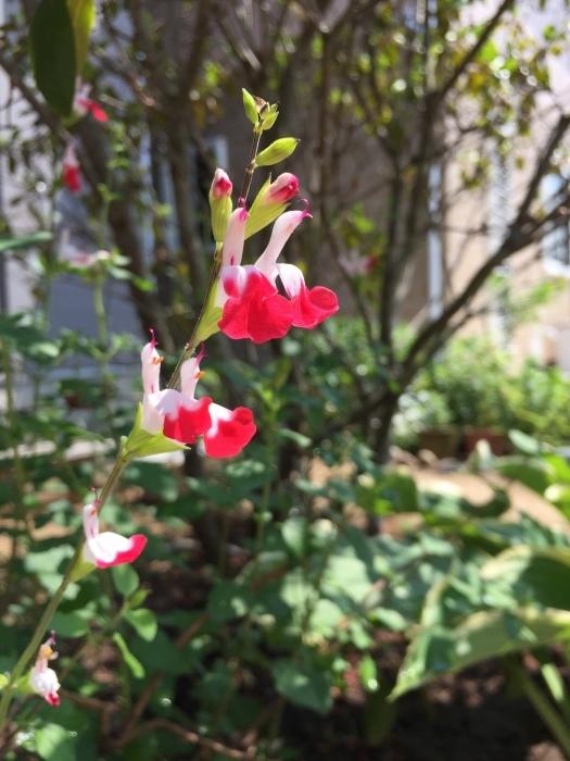 庭の植物_d0332870_14412529.jpg