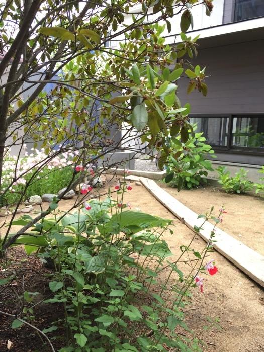 庭の植物_d0332870_14423660.jpg