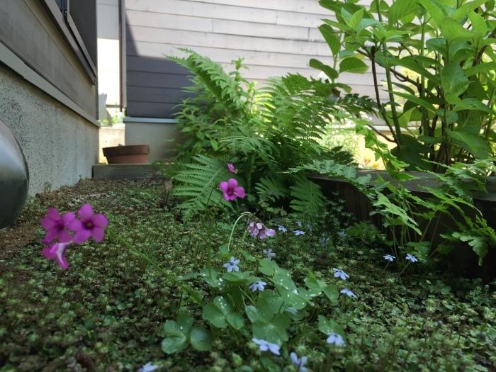 庭の植物_d0332870_14430839.jpg
