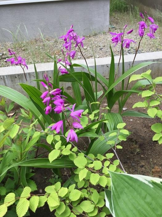 庭の植物_d0332870_14460137.jpg
