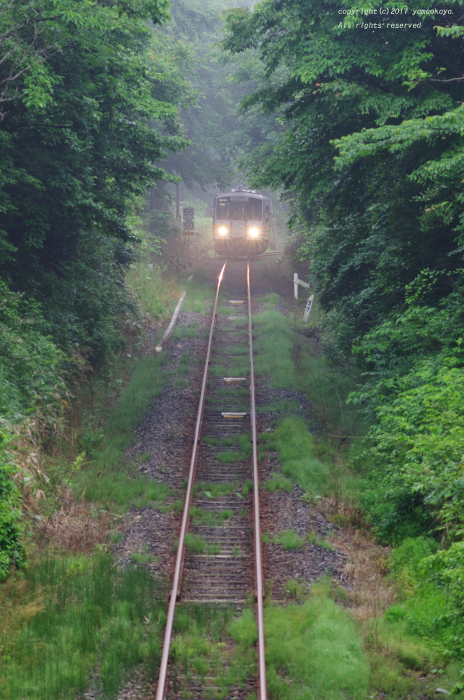 森の朝へと_d0309612_22441355.jpg