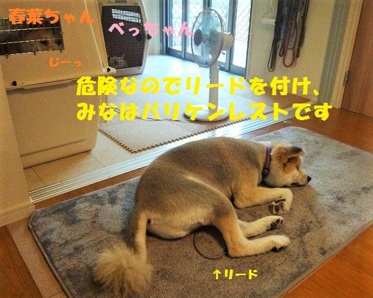 f0121712_15415389.jpg