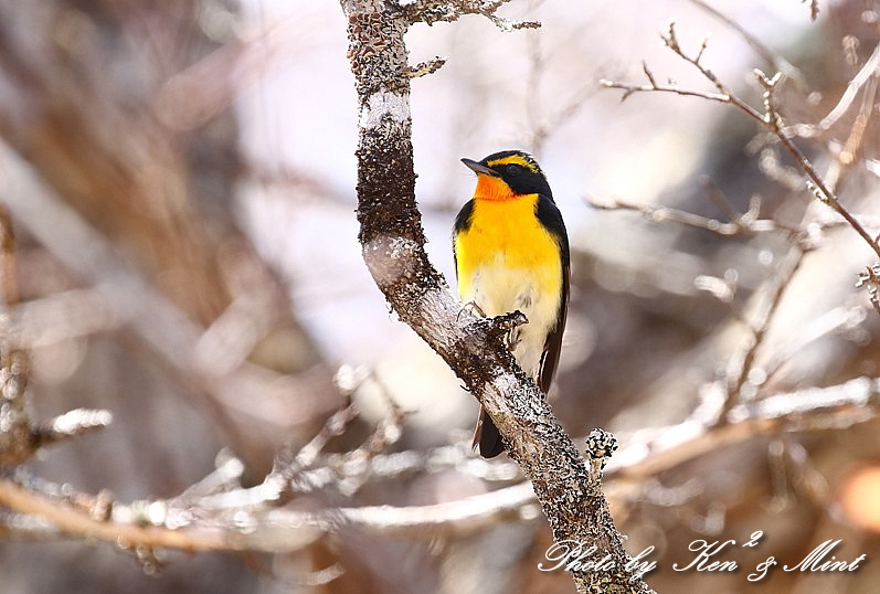二日目の鳥さん達♪_e0218518_19511676.jpg